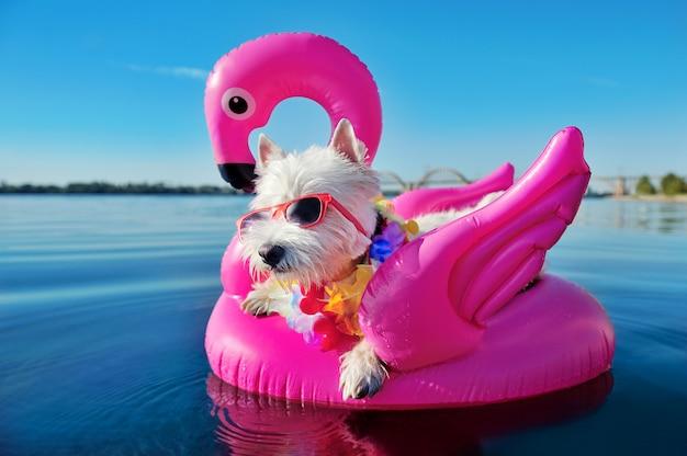 Joli chien se détendre au complexe tropical