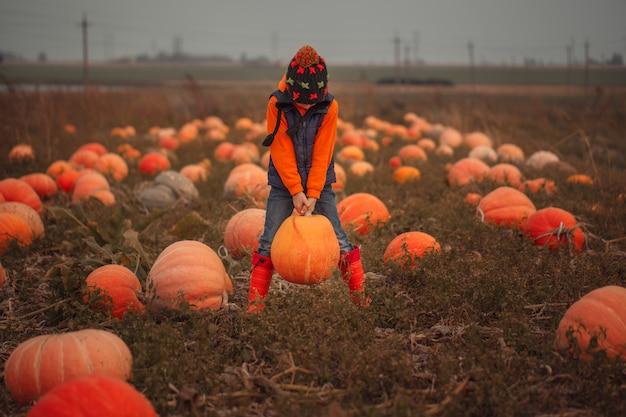 Joli garçon ramassant une citrouille au champ de citrouilles à l'automne.