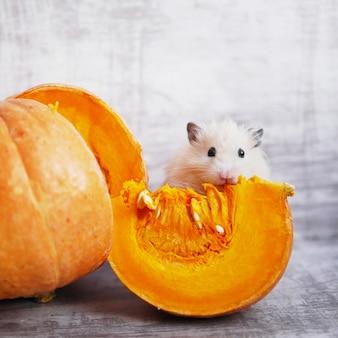 Un joli hamster moelleux est assis près d'un morceau de citrouille coupé
