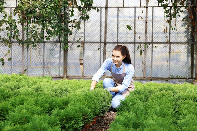 Joli jeune jardinier s'occupant du genévrier en serre
