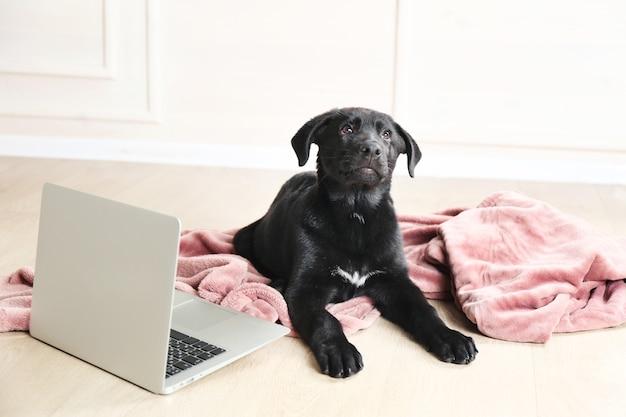 Joli jeune labrador noir allongé près d'un ordinateur portable sur une couverture rose