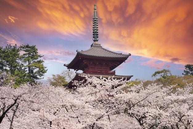 Joli et joli fond d'écran de fleurs de cerisier rose, tokyo japon, soft focus