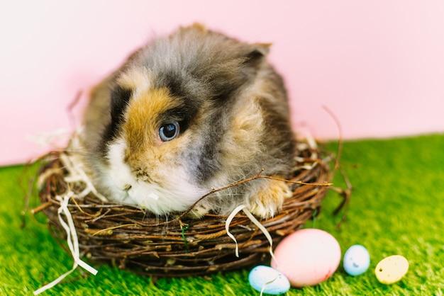 Un joli lapin brun est assis dans un panier en bois à côté d'oeufs pastel peints. carte de pâques.