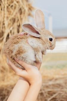 Joli lapin dans les mains. animaux de ferme lapin de pâques