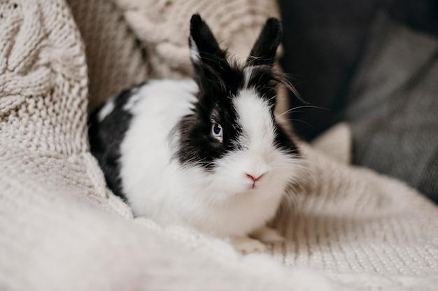 Joli lapin noir et blanc sur une couverture en tricot