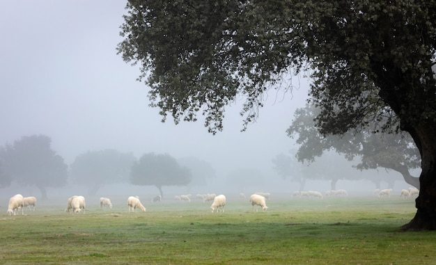 Joli paysage avec brouillard