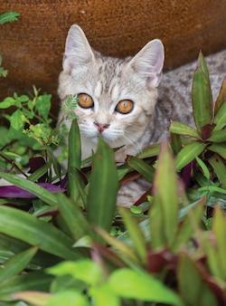 Joli petit chat aux beaux yeux jaunes dans un jardin en plein air à la recherche d'oiseaux