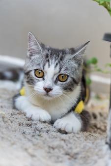 Joli petit chat avec de beaux yeux jaunes sur le sable blanc dans le jardin en plein air