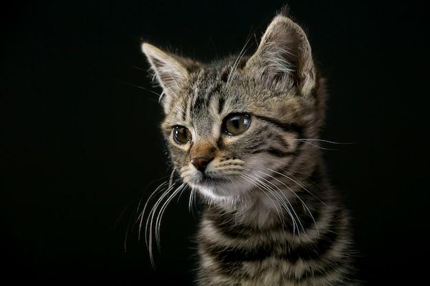 Joli petit chat isolé sur fond noir