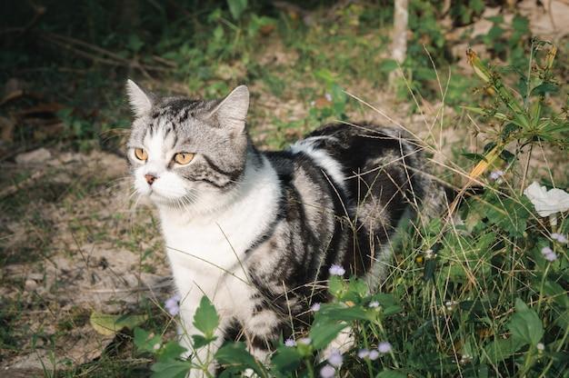 Joli petit chat mignon avec de beaux yeux jaunes se détendre dans le jardin
