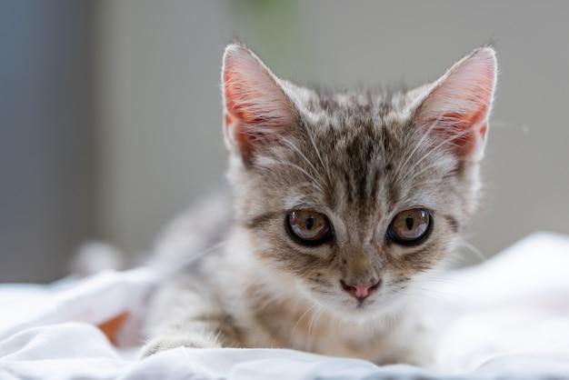 Joli petit chat mignon sur fond blanc