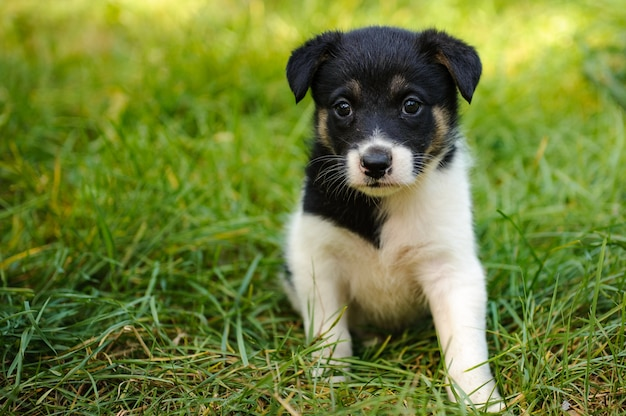 Joli petit chiot assis sur l'herbe