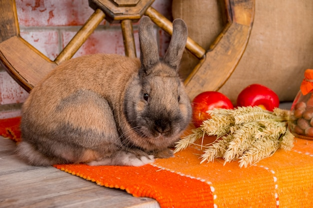 Joli petit lapin à la décoration d'automne. lapin.