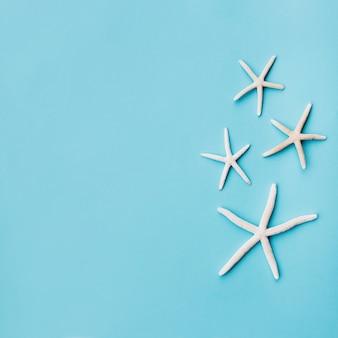Jolie famille d'étoiles de mer sur fond bleu