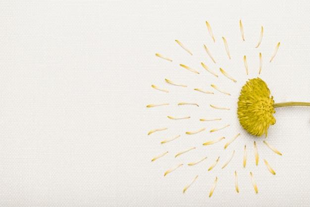 Jolie fleur de célébration avec espace copie