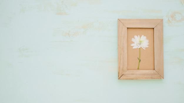 Jolie fleur dans le cadre