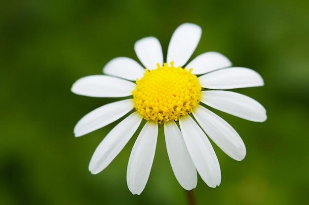 Une jolie fleur dans le champ au printemps