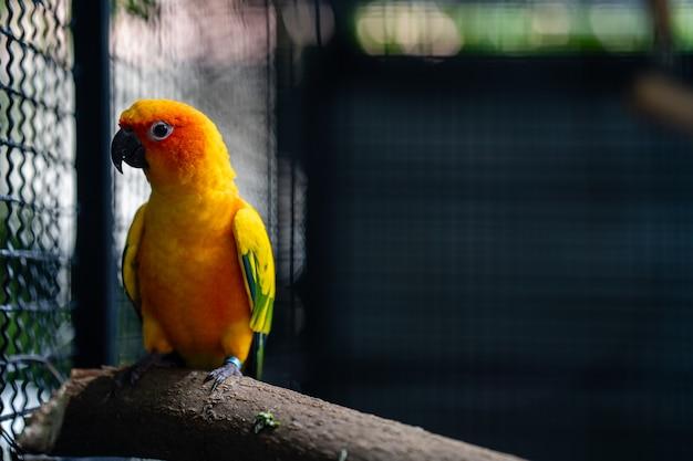 Jolie perruche à la recherche dans la cage.