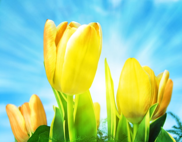 Jolies tulipes avec le soleil fond
