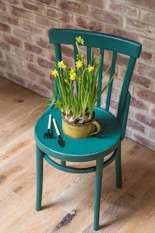 Jonquilles jaunes fraîches en pot avec des instruments de jardin sur chaise vintage
