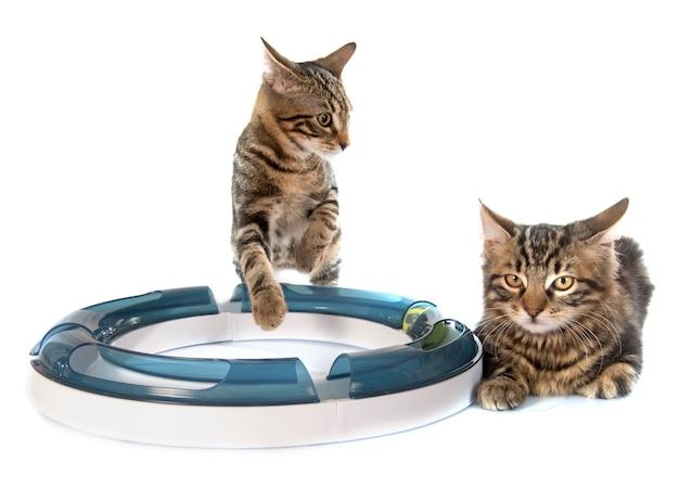 Jouer au chaton
