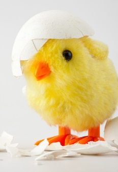 Jouet bébé poulet avec coquille d'oeuf