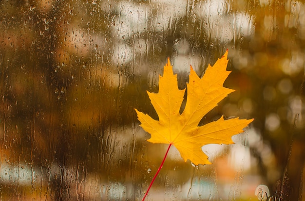 Jour d'automne, gouttes de pluie sur la fenêtre avec la feuille d'érable coincée