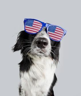 Jour de l'indépendance 4 juillet chien border collie. isolé sur une surface de couleur grise