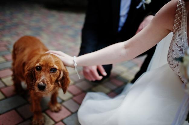 Jour de mariage. mains dans les mains du couple de jeunes mariés. chien drôle.