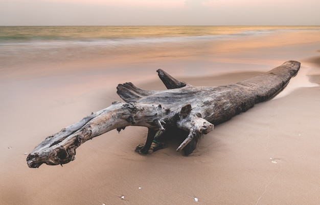 Journal d'arbre séché sur la plage.