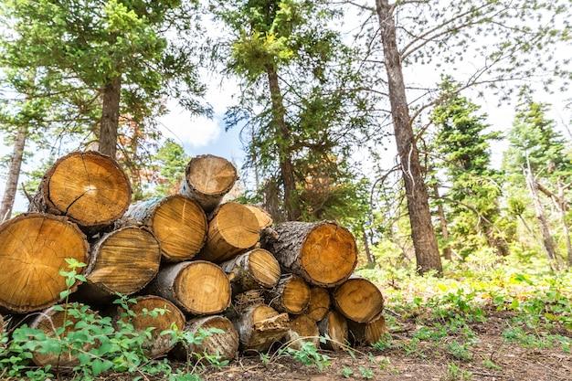 Journaux dans la forêt de pins.