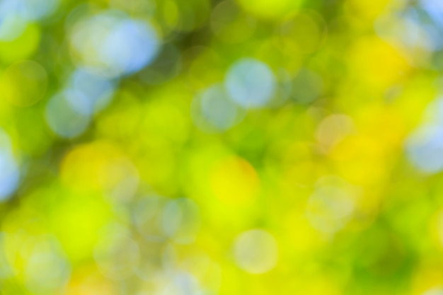 Journée ensoleillée bokeh vert de forêt naturelle