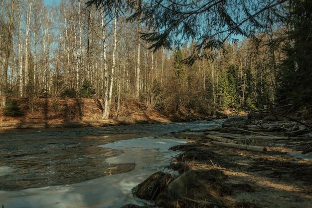 Journée ensoleillée dans la forêt russe