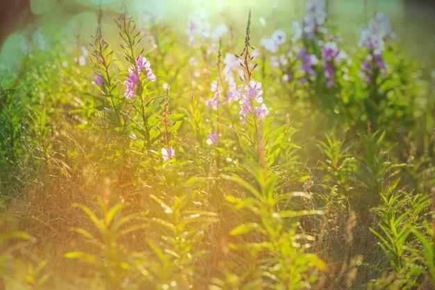 Journée ensoleillée sur la prairie des fleurs. beau fond naturel.