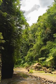 Journée ensoleillée. ruisseau calme divisant les jungles sur deux parties, endroit calme et paisible pour la méditation