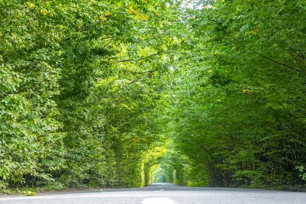 Journée d'été sur une route asphaltée vide à travers un tunnel vert de couronnes d'arbres