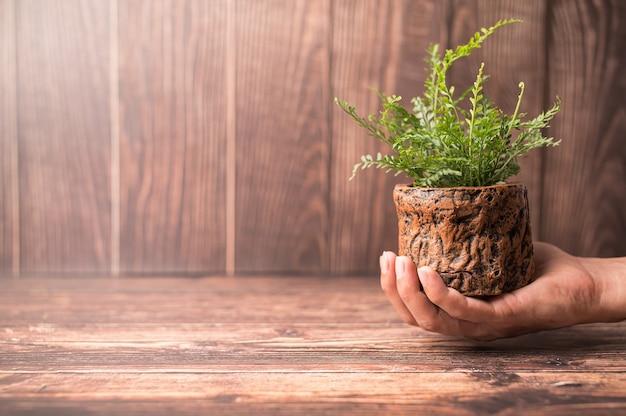 Journée mondiale de l'environnement. aimez le monde. main tenant un pot de plante