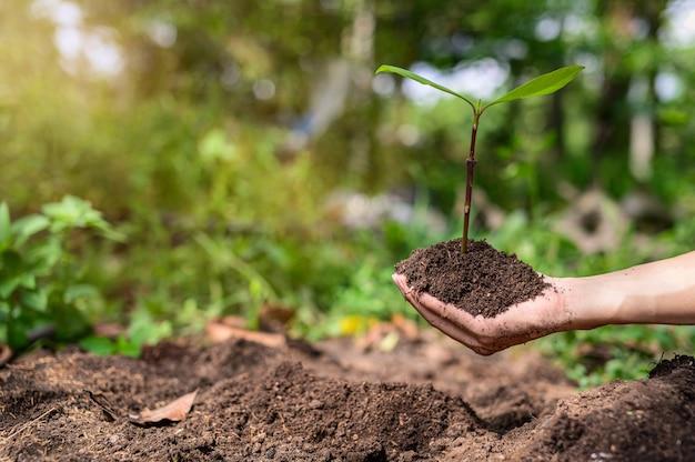 Journée mondiale de l'environnement, planter des arbres et aimer l'environnement, aimer la nature.