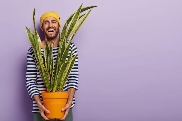 Joyeux mec optimiste porte un pot avec une plante d'intérieur, rit joyeusement, porte un pull marin rayé