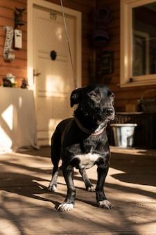 Joyeux petit chien sur la véranda d'une maison de campagne, thème d'automne. ombre chaude. espace de copie