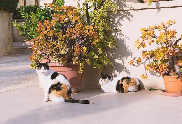 Jumeaux de chats sans-abri dans les rues de malte