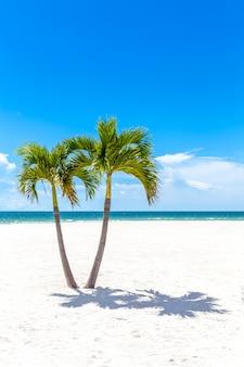 Jumeaux de palmiers sur la plage de floride, usa