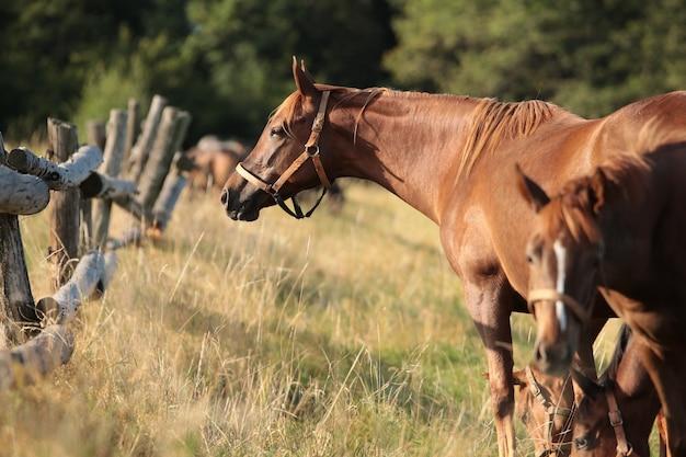 La jument regarde les autres chevaux le matin