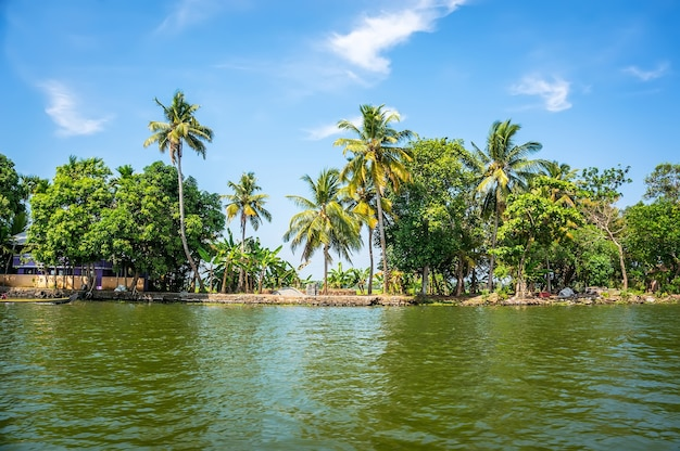 Jungle des backwaters du kerala - une chaîne de lagunes et de lacs saumâtres parallèles à la côte de la mer d'oman au kerala, dans le sud de l'inde