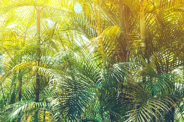 Jungle ensoleillée