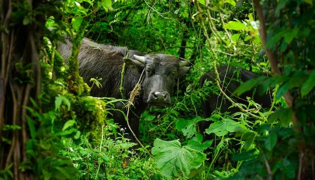 Jungle de la faune sur le continent asiatique