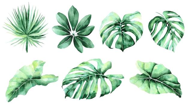Jungle, illustrations aquarelles botaniques, éléments floraux, feuilles de palmier, fougère et autres