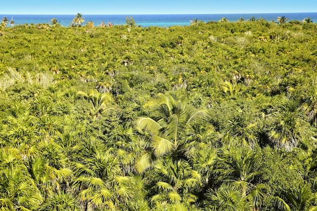 Jungle des palmiers tropicaux sian kaan tulum
