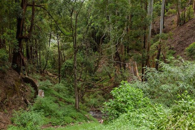Jungle vallonnée dense, végétation dense. une forêt tropicale.