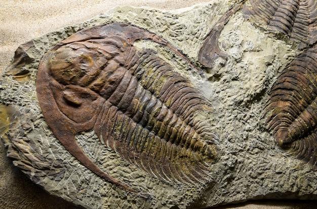 Jurassique fossilisé
